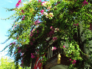 Lycian Way Flowers on house